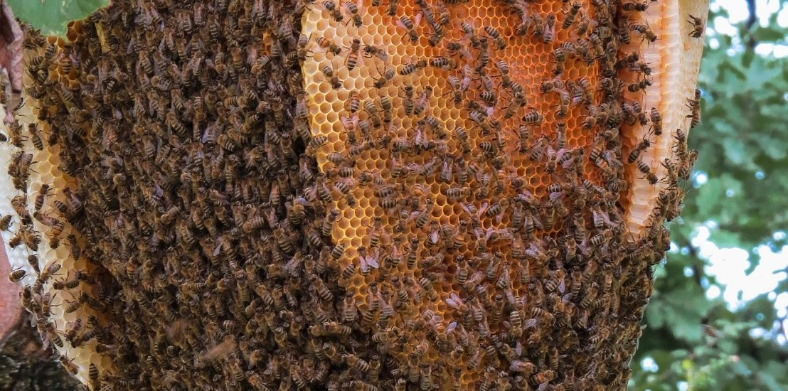 Beehive-Removal
