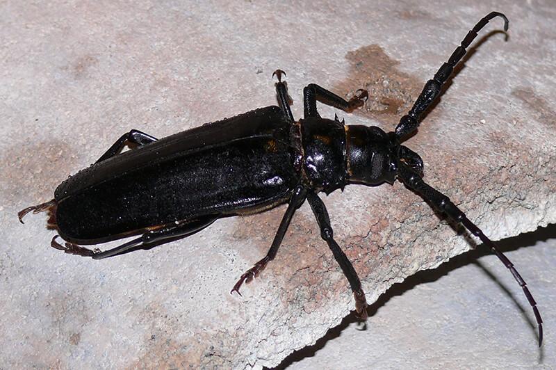 Phoenix Pest Control